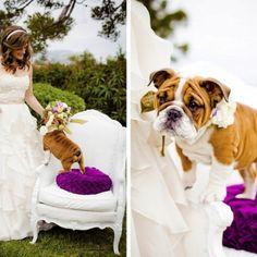 Beautiful Wedding Shoot With Such A Cute Little Bulldog