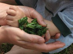 Bulk Herb Store - Articles - Our Most Used Home Remedies