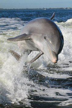 Dolphin smile!