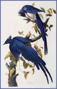 N.H. - John James Audubon