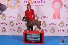 100X100 Mascotas 2015. Exposición Internacional Canina de Primavera.
