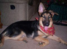 Shiloh 6 months old. Dec 2008. ❤️
