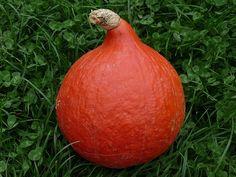 Dýně Pear, Onion, Fruit, Vegetables, Food, Onions, Essen, Vegetable Recipes, Meals