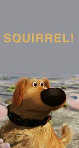 Squirrel! #Up