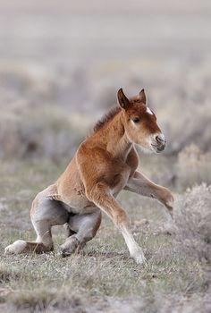 New wild horse stallion mustang american