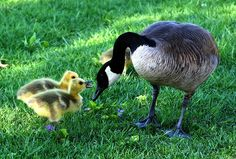 Pixabay - Mehr als 2 Millionen Gratis-Fotos zum Herunterladen Mothers Day Quotes, Mothers Day Cards, Happy Mothers Day, Mother Goose Parade, Conscious Parenting, Pet Day, Love Mom, Mundo Animal, Save Her