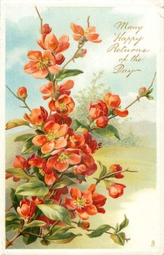 Red thorny japonica, 1910