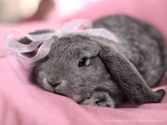 pretty in pink bunny