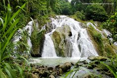 Traveling Morion   Let's explore 7107 Islands: Zamboanga del Sur   The Simply Majestic Pulacan Falls of Labangan Mindanao, Naturally Beautiful, More Photos, Philippines, Islands, Waterfall, Travel Photography, Traveling, Let It Be