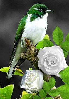 Kinds Of Birds, All Birds, Cute Birds, Pretty Birds, Little Birds, Exotic Birds, Colorful Birds, Green Birds, Beautiful Creatures