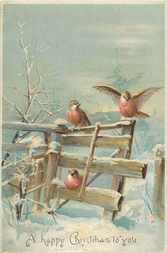 two robins sit on top rail one underneath on bottom rail