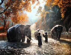 Elephant bathing by Auttapon Nunti on 500px