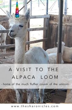 A review of the Alpaca Loom in Paarl. Tips for a family-friendly Covid-19-safe day trip, just outside the city of Cape Town. Cape Town, Loom, Travel Humor, Africa Travel, Amazing Destinations, Day Trip, Tanzania, Passport, Cruise