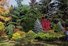 NATURAL PRIVACY SCREEN Tired of looking at the neighbor's garage? A mixed border of flowering trees, shrubs and evergreens makes a rich tapestry of changing seasonal interest that also provides food and cover for wildlife.
