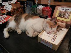 昼寝中の猫 愛宕神社