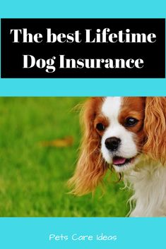 Pet Care Insurance - Pet Health Care Importance - Pets Care Ideas Pet Insurance Reviews, Pet Health Insurance, Best Pet Insurance, Puppy Care, Pet Care, Dog Walking Flyer, Small Dog Names, Pets Online, Cheap Pets