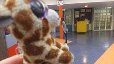 giraffen kusjee xxx
