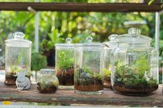 Learn how to make a terrarium to add low-maintenance plants to your space. And you don't necessarily have a green thumb to care for a terrarium! Terrarium Diy, Hanging Terrarium, How To Make Terrariums, Suculentas Interior, Plants In Bottles, Large Glass Jars, Bottle Garden, Low Maintenance Plants, Terraria