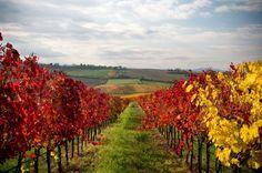 Wine country, Quebec, Canada                                                                                                                                                                                 More