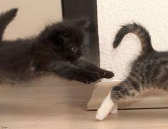 Funny cats (45 photos)