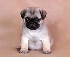 One day this will be my dog, Winston <3