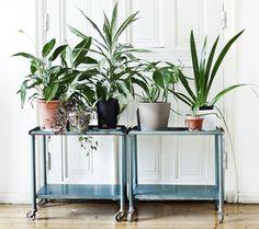 plants + metal