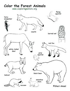 Forest Animals Coloring Pages. 20 forest Animals Coloring Pages. forest Animal Coloring Pages to Print Forest Coloring Pages, Preschool Coloring Pages, Animal Coloring Pages, Coloring Pages For Kids, Coloring Sheets, Kids Coloring, Coloring Books, Forest Animal Crafts, Theme Forest