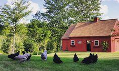 Fresh Eggs Daily®: A Week in Farm Photos August 16th - 22nd