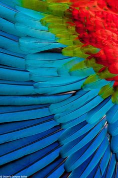 ef58cd854ff47 Macaw feathers by Octavio Campos Salles on 500px Feather Texture