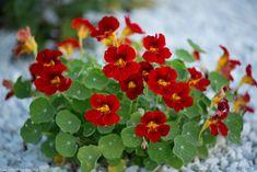 Salvia, Ikebana, Flowers, Floral, Gardening, Home, Craft Flowers, Agriculture, Jordan Spieth
