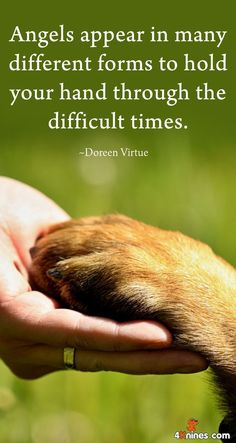 Agree! Great dog quote.