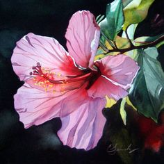 pink back lit hibiscus original watercolor miniature painting by ...