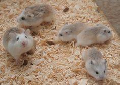 Mochi & Toro's newborns