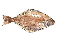 Know Your Seafood | SAVEUR