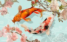 Two Japanese Koi fish swimming Vector. Choose from thousands of free vectors, clip art designs, icons, and illustrations created by artists worldwide! Koi Fish Drawing, Fish Drawings, Koi Art, Fish Art, Watercolor Background, Floral Watercolor, Vector Background, Koi Kunst, Coy Fish