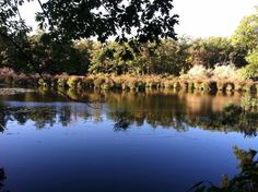autumn coming in, Horn Pond, Woburn, MA. @DavidBCrowley