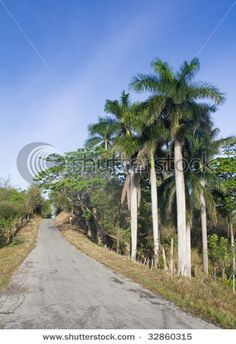 A Cuban country road