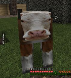 HD texture packs are always rewarding Stupid Funny Memes, Funny Laugh, Bad Memes, Reaction Pictures, Funny Pictures, Random Pictures, Funny Images, Funny Animals, Cute Animals