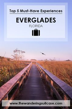 An all encompassing guide to the Everglades National Park, including tips and must have experiences when visiting the Everglades, Florida.