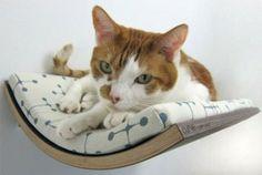 Verwöhnen Sie Ihre Hauskatze mit einem kuschelweichen Katzen-Bett  - http://freshideen.com/haustiere/hauskatze.html