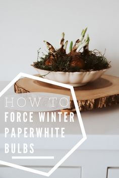 An easy DIY tutorial on how to force winter paperwhite bulbs so you can have flowers blooming, even in the winter. Check out the video tutorial to see a step-by-step guide on how to plant your own paperwhites. #paperwhitebulbs #howtoforcewinterbulbs #DIYtutorial Pine Cone Bird Feeder, Plant Guide, Pea Gravel, Best Indoor Plants, Hearth And Home, How To Grow Taller, Slow Living, Green Plants, Gardening Tips