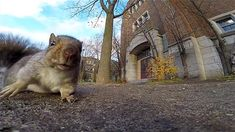 Learn what it means when squirrels flick their tails, dig holes, and dart across the street.