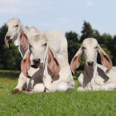 Belos animais do amigo @elairbachi | IG: @Abcz.pmgz