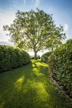 Awesome 35 Cozy Spring Minimalist Garden Design Ideas For Modern House Back Gardens, Outdoor Gardens, Beautiful Landscapes, Beautiful Gardens, Minimalist Garden, Specimen Trees, Garden Architecture, Garden Pool, Outdoor Landscaping