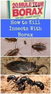 Borax is very effective at keeping cockroaches, ants, water bugs and a few other household pests at bay. - Top 10 Most Creative Household Uses for Borax Household Pests, Household Cleaning Tips, Cleaning Hacks, Cleaning Solutions, Cleaning Recipes, Rental Solutions, Daily Cleaning, Household Products, Household Chores