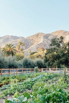 Plumcot Farms Malibu Hamptons Style Decor, The Hamptons, Dinner Themes, Bougainvillea, Step Inside, Dream Garden, The Neighbourhood, Grow Food, Parties