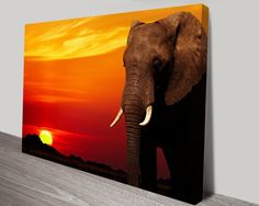Elephant Sunset Canvas Print & Home Wall Decor Cairns Queensland Artwork Pictures, Print Pictures, Framed Art Prints, Canvas Prints, African Sunset, Elephant Wall Art, Animal Art Prints, Sunset Canvas, Photo Canvas