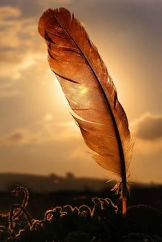 Sunlit Feather