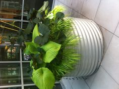 Great plant combo for tropical style shade Container Flowers, Container Plants, Container Gardening, Container Design, Lawn And Garden, Garden Pots, Garden Ideas, Shade Plants, Pot Plants