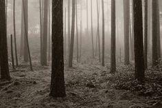 Gabriola Island Forest